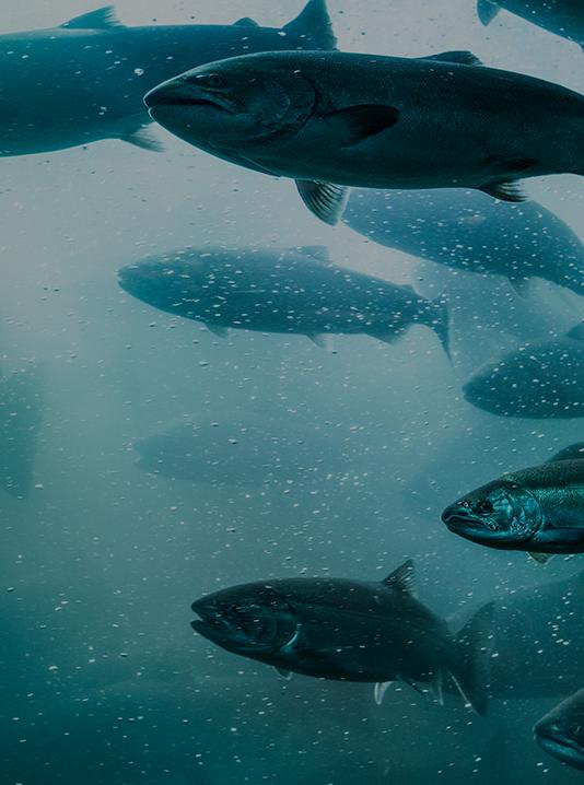 Productos acuicultura